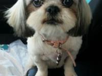 I have a sweet little female Shih Tzu I need to find a
