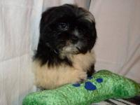 Beautiful soft, silky female. She is 10 weeks old.