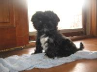 I have a 10 week old female shih tzu puppy I need to