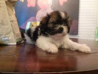 We have one adorable little girl puppy looking for a