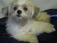 I need to rehome my granddaughters Shih Tzu puppy. She