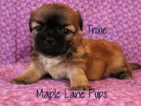 Trixie is a little Darling! She is a stunning Solid