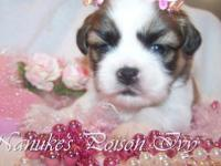 NO BREEDING RIGHTS: Our babys are 700.00 All pups will