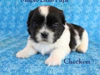Checkers is a Classic Black & White little boy! He has