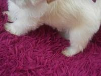 We have our beautiful cream shih tzu that live with us,