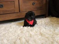 Reggie is such an adorable boy! Reggie is a ShihTzu