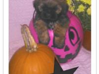 I have a litter of Shih-Tzu's born on Sept. 4.