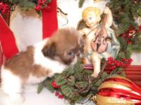 HOLIDAY SALE!!! Beautiful and playful small breed