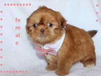 En venta shih tzus puppies para mayor informacin favor