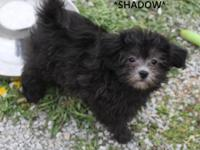 *Shadow is very,sweet,and playful.He is current on his