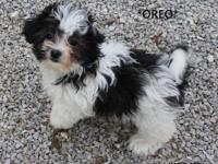 *OREO*is very cute,sweet and playful. He loves to play
