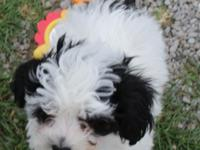 *Bandit* is SOO cute,playful,and energetic. He loves to