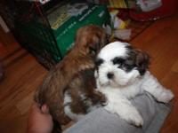 I have 2 lovely little puppies for sale. Two females