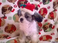 $800.00 we have 2 female one male black and one white