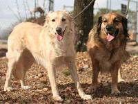Shiloh and Goldie's story You can fill out an adoption
