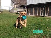 Shiloh's story Shiloh was surrendered 11/15/18 because