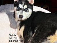 Shiloh's story Please contact Constance