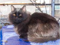 Shine's story A very quiet, unassuming cat, somewhat of
