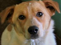 Shona's adoption fee is $80 which covers the cost of