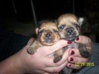 I HAVE 2 GIRLS - $ 300 & 2 BOYS - $ 250 EACH. TAILS