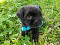 Brody is a very cute little guy. He is solid Black. He