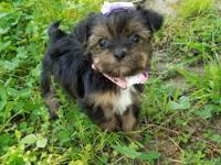 Breezie is gorgeous Black and Tan little girl. She is a