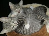 Kittens to good home left, male born 8-20-14, small