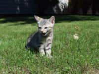 This absolutely sweet kitten is ready to find a home of
