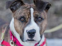 Shorty is a sweet and cuddly 2-year-old mixed-breed