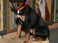 My story Shy is a cute 2-year old female Miniature