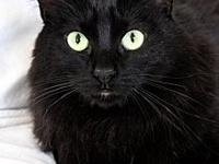 My story Shyla is a sweet, quiet young feline.
