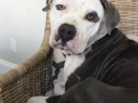 Shylah is a super sweet girl who about 3 years old and