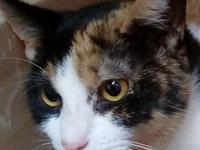 Sia is friendly and social. She likes to play and would