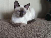 We have a few older Siamese and Balinese cats and older