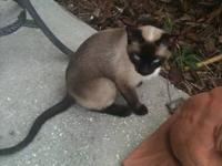 I have 2 Siamese cats that are looking for wonderful