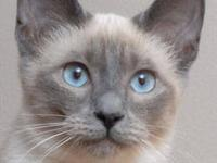 Blue Eyes Cattery is located in Southern Maryland.