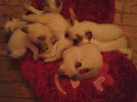 I have seven 8 week old kittens, they are pure bred