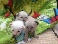 Kittens are ready !! they have actually been wormed,
