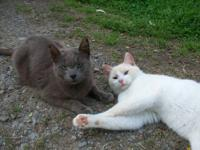 These are one of a kind blue eyed beauties. Gentle,