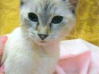 Siamese - Tinkerbell - Check Out Her Magical Powers! -