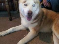 Walker is a 6 year old male husky. He is very loving