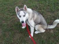 5month old female husky almost completely house trained