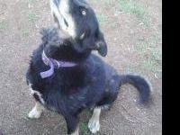 Siberian Husky - Kenzee - Large - Young - Female - Dog