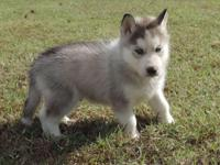 This beautiful boy will be 8 weeks on Nov. 14 and can