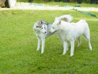 Take a look at Snowball and Chucha they will be having