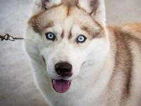 We have 5 grey/white males available in Penny and