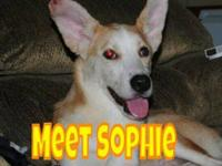 Siberian Husky - Sophie - Large - Adult - Female - Dog