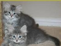 Adorable kittens for sale. contact me for more info