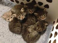 We have a adorable litter of kittens now ready for a