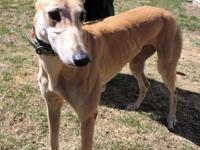 Sider is a 3.5 year old red female that arrived on